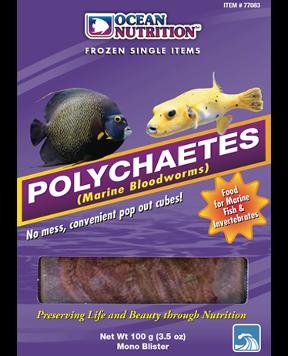 ON - Polychaetes