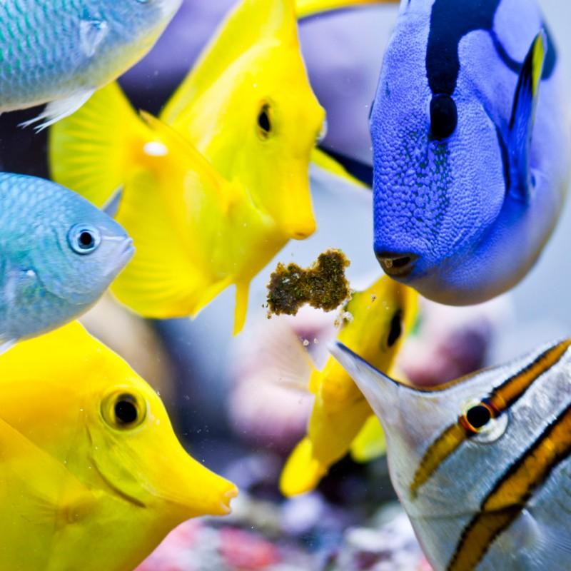 Easy Reefs Masstick Fish Food